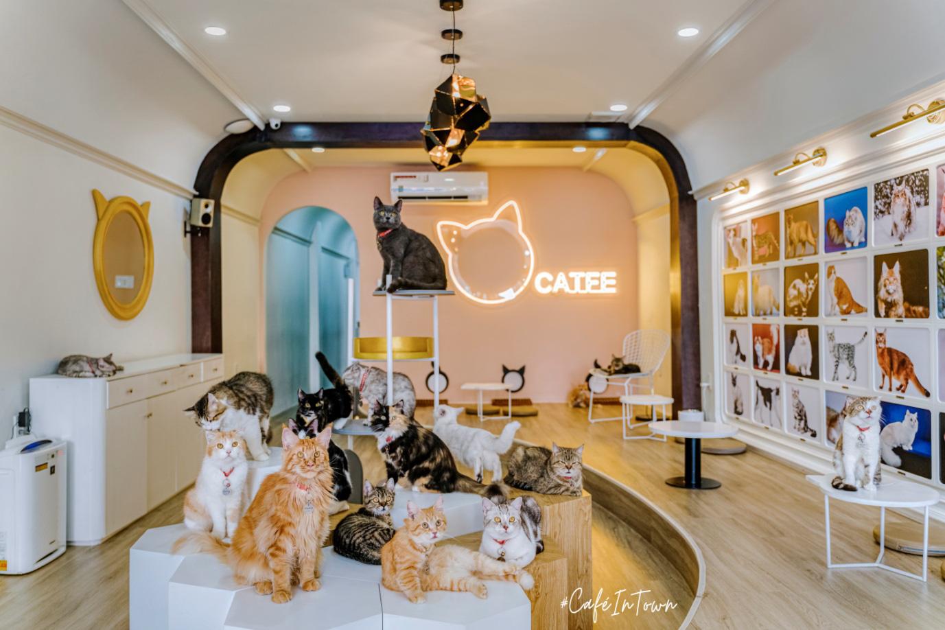 Hội mê boss, nhất định phải ghé check-in quán cafe mèo siêu chất này - Catfe - Ảnh 3.