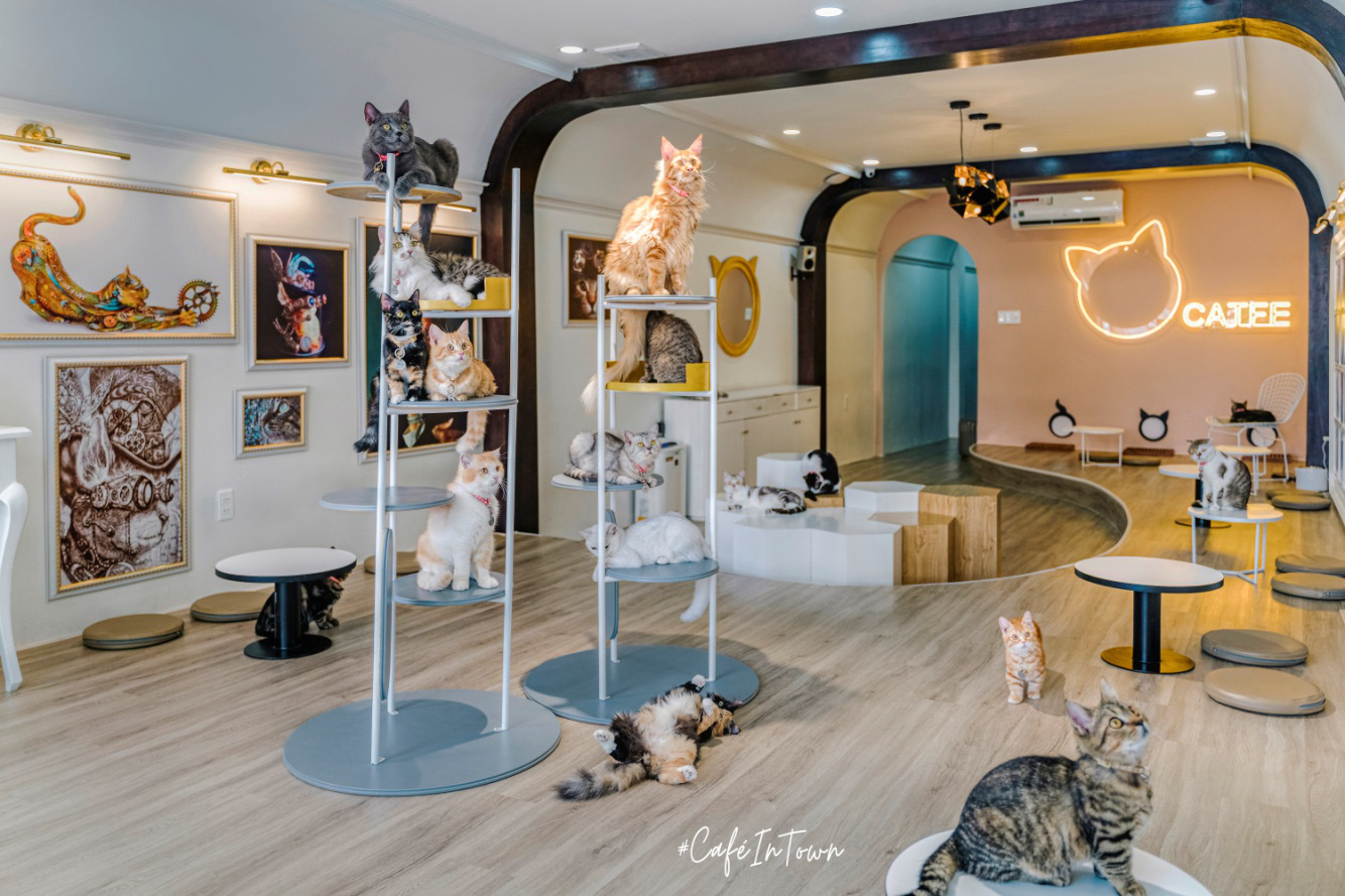 Hội mê boss, nhất định phải ghé check-in quán cafe mèo siêu chất này - Catfe - Ảnh 5.