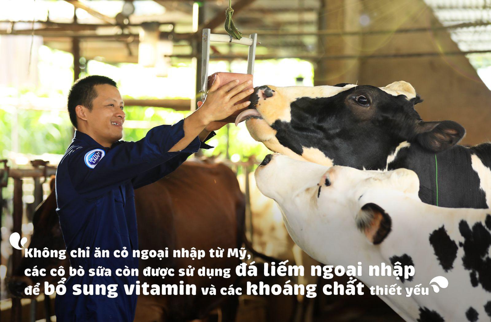 Theo chân nhiếp ảnh gia nổi tiếng: Bất ngờ trước nỗ lực sản xuất dòng sữa chuẩn Hà Lan của nhiều thế hệ nông dân Việt - Ảnh 4.