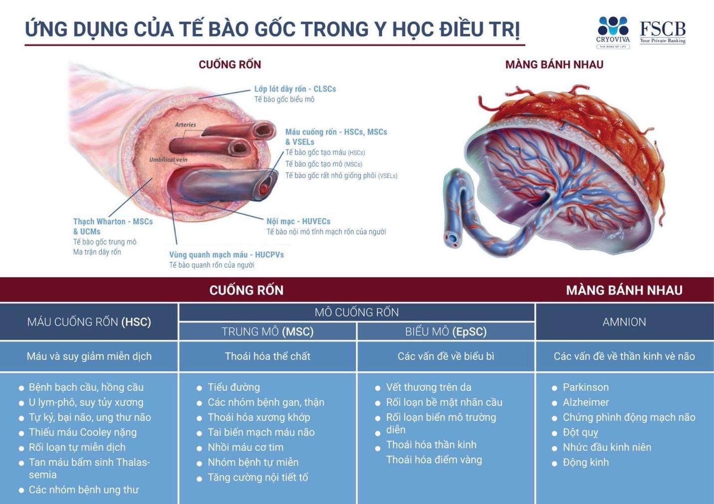 """Năm 2020 khó khăn, sao Việt vẫn mạnh tay chi khủng để lưu trữ tế bào gốc cho """"chuột vàng"""" của mình - Ảnh 1."""