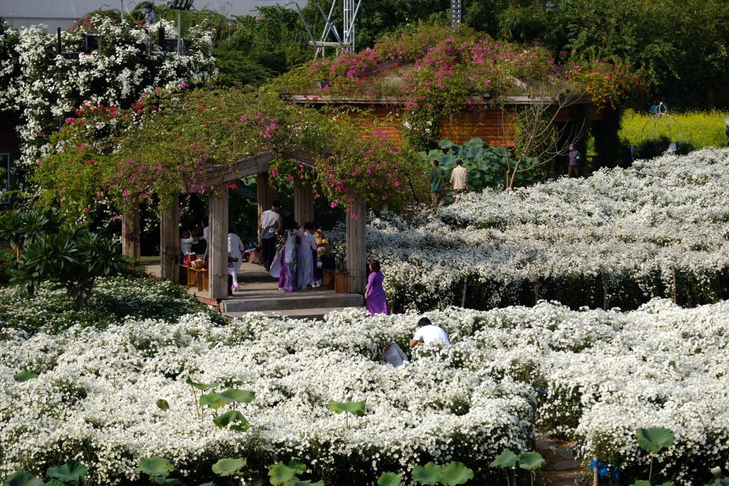 Địa điểm check-in các loài hoa đẹp bậc nhất trên thế giới nằm giữa lòng Hà Nội - Ảnh 2.