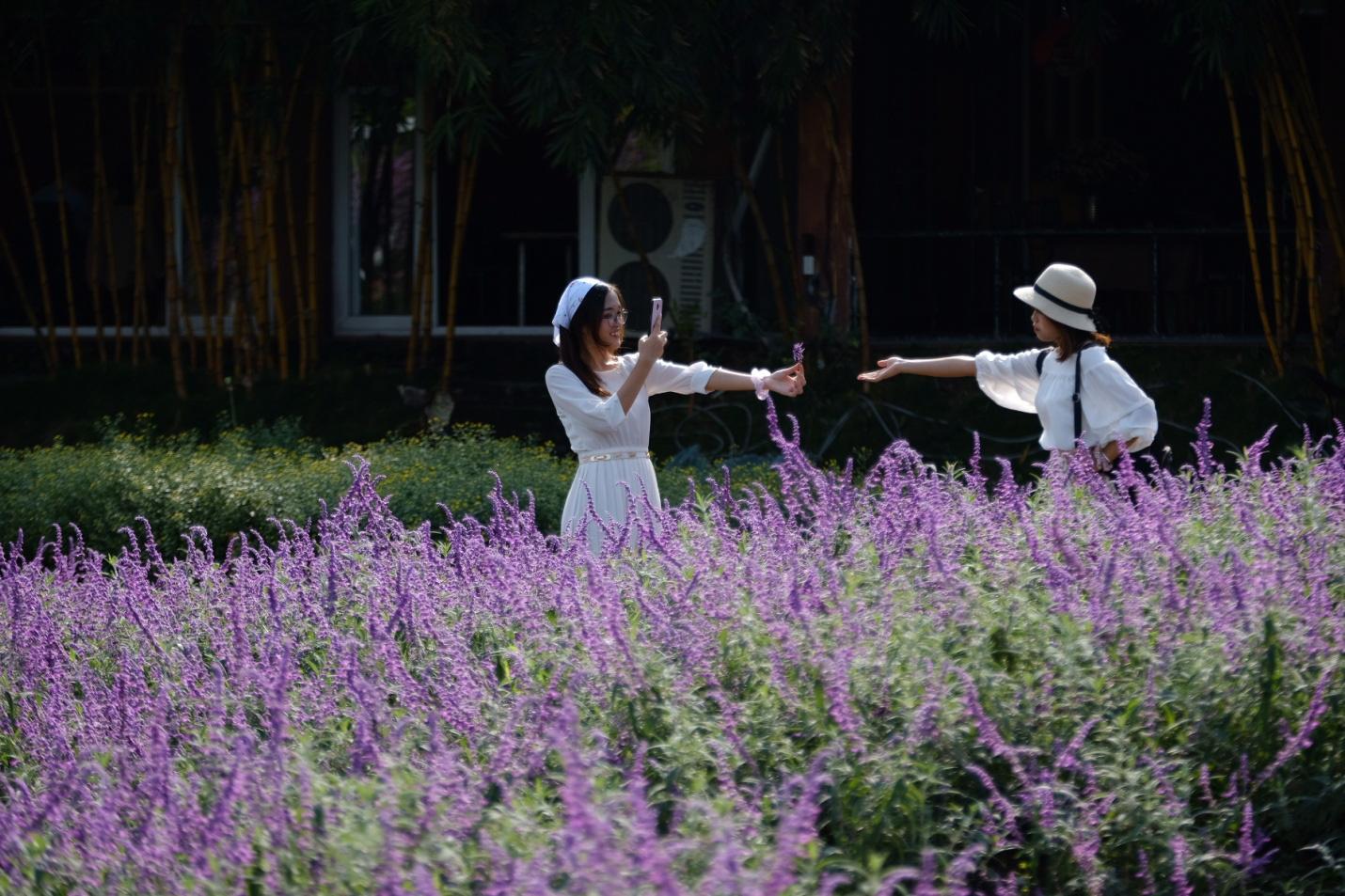 Địa điểm check-in các loài hoa đẹp bậc nhất trên thế giới nằm giữa lòng Hà Nội - Ảnh 5.