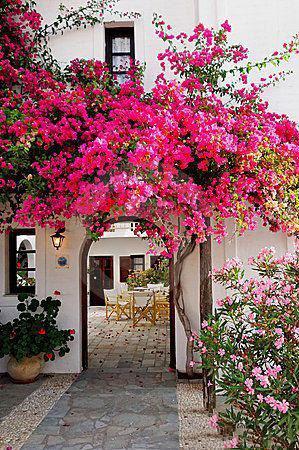 Bí mật xu hướng kiến trúc xanh Địa Trung Hải và những lợi ích cho gia chủ - Ảnh 1.