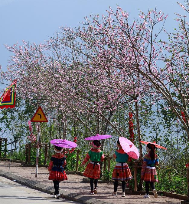 Giới trẻ phát cuồng vì mùa xuân Fansipan đẹp thần sầu - Ảnh 2.