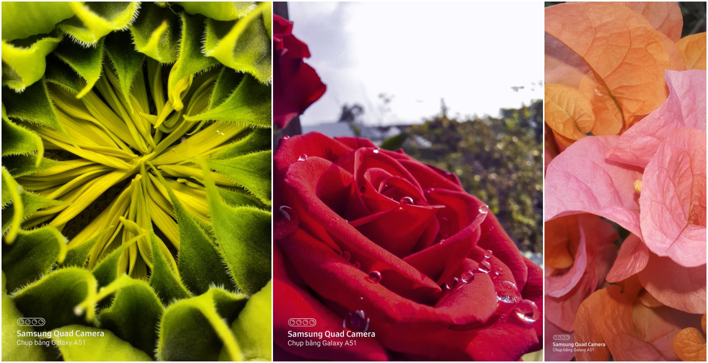 Cuộc thi chụp ảnh macro cận cảnh: Mang tới những sáng tạo khác biệt, đậm chất nghệ thuật! - Ảnh 2.