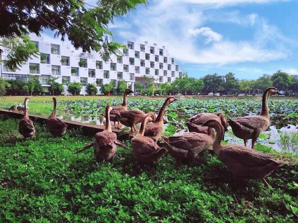 Khuôn viên thơ mộng như trời Âu của ngôi trường chính hãng Made in Vietnam - Ảnh 1.