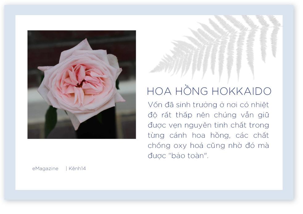 """Hè năm nay, hãy kết nạp """"siêu phẩm hoa hồng Hokkaido vào công cuộc skincare để mang thanh xuân về cho làn da của bạn - Ảnh 7."""