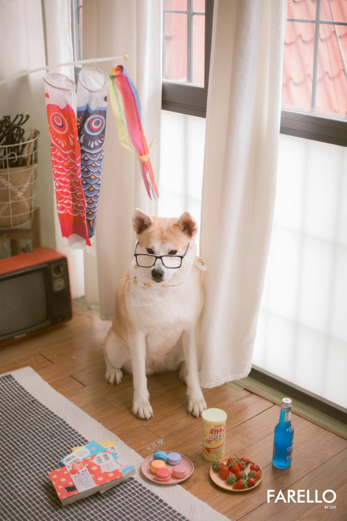 Chú chó Momo Inu đốn tim fan trong vai trò mẫu ảnh - Ảnh 2.