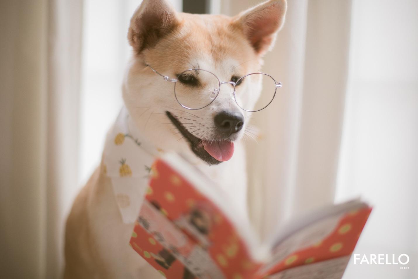 Chú chó Momo Inu đốn tim fan trong vai trò mẫu ảnh - Ảnh 3.