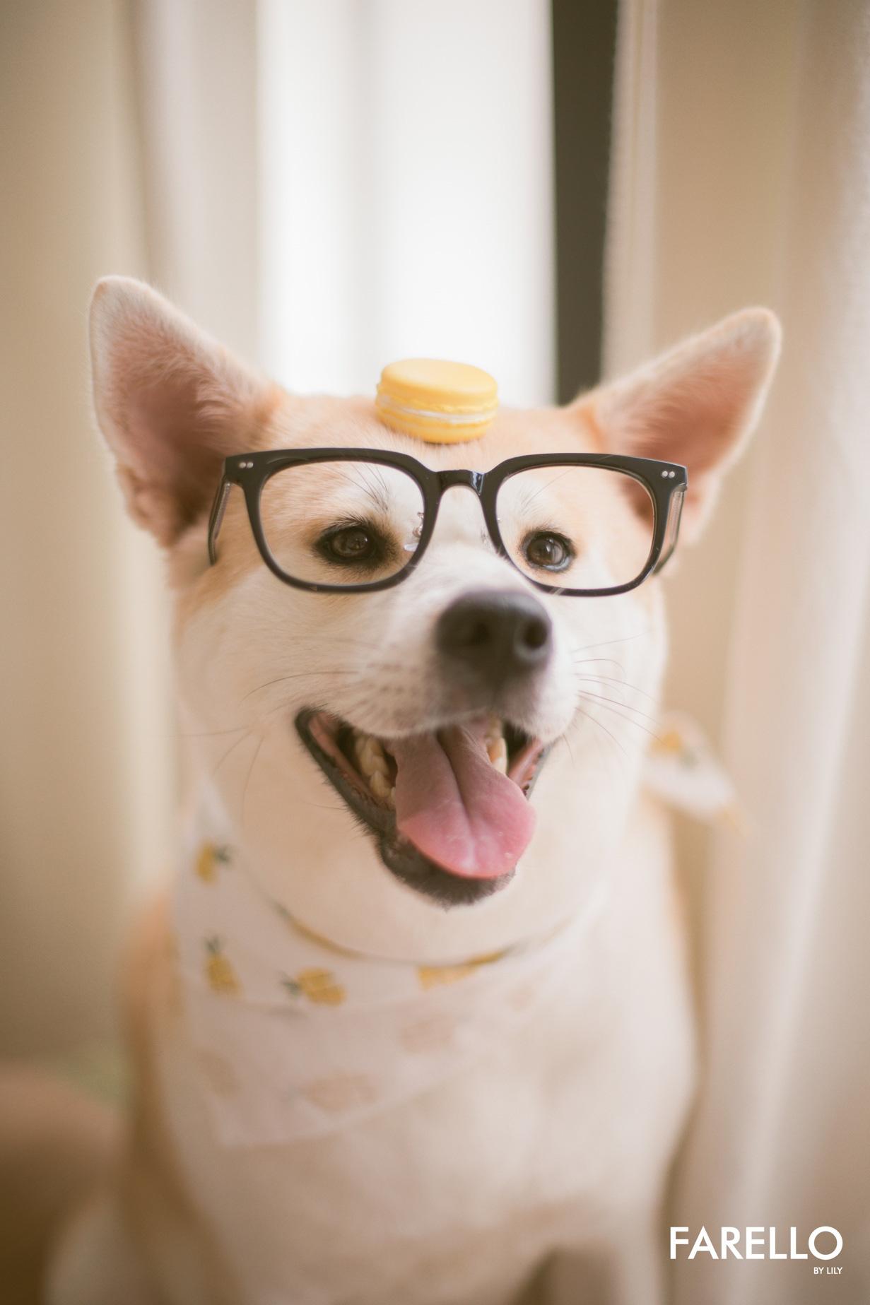 Chú chó Momo Inu đốn tim fan trong vai trò mẫu ảnh - Ảnh 4.