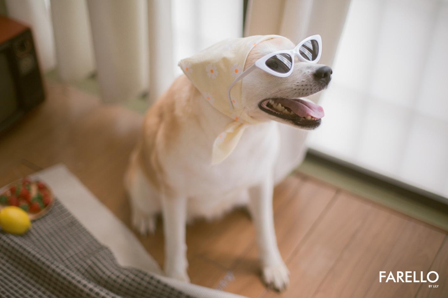 Chú chó Momo Inu đốn tim fan trong vai trò mẫu ảnh - Ảnh 6.