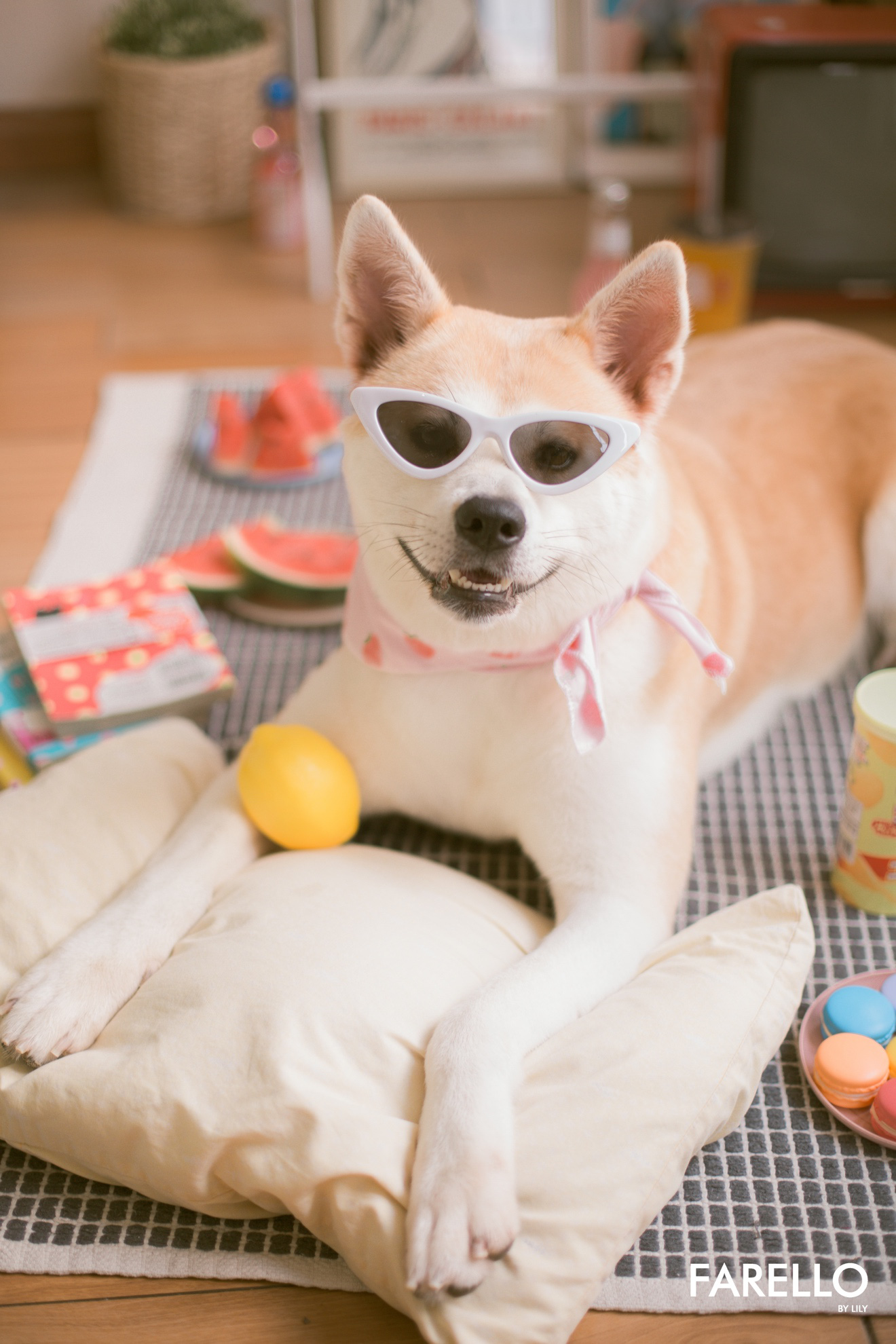 Chú chó Momo Inu đốn tim fan trong vai trò mẫu ảnh - Ảnh 7.