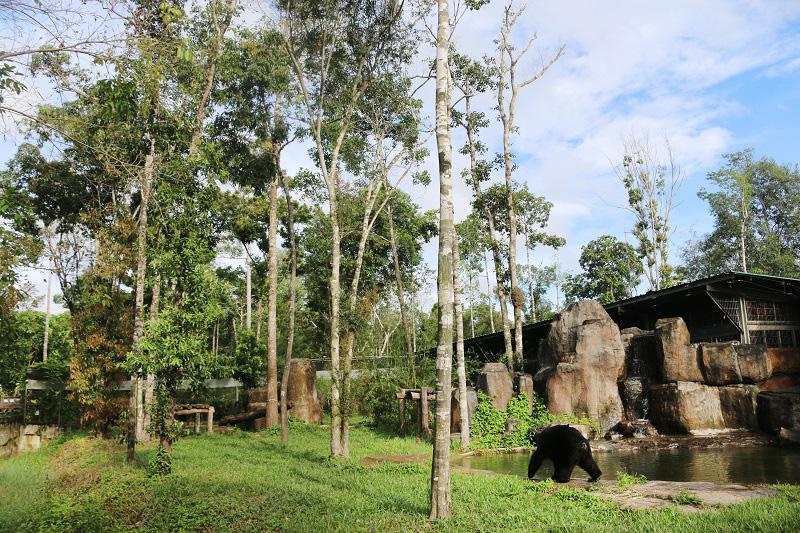 Vinpearl Safari hồi sinh thần kỳ cho gấu ngựa - Ảnh 2.