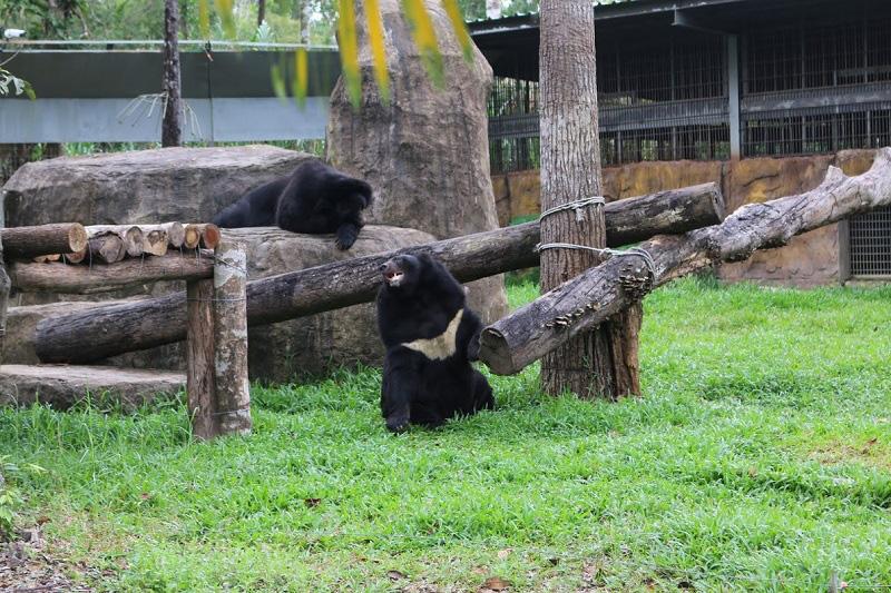 Vinpearl Safari hồi sinh thần kỳ cho gấu ngựa - Ảnh 4.
