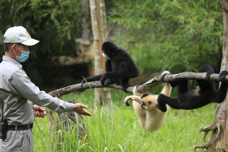 Vinpearl Safari hồi sinh thần kỳ cho gấu ngựa - Ảnh 6.