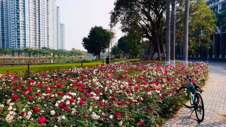 Hơn một triệu bông hồng nở hoa rực rỡ khắp Ecopark - Ảnh 14.