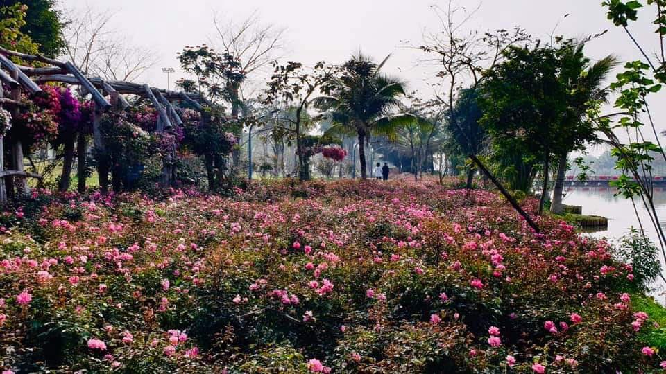 Hơn một triệu bông hồng nở hoa rực rỡ khắp Ecopark - Ảnh 3.