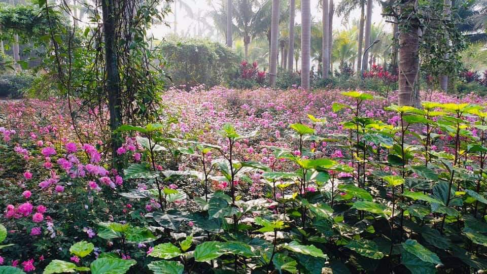 Hơn một triệu bông hồng nở hoa rực rỡ khắp Ecopark - Ảnh 4.