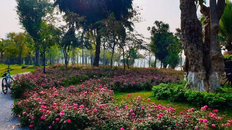 Hơn một triệu bông hồng nở hoa rực rỡ khắp Ecopark - Ảnh 6.