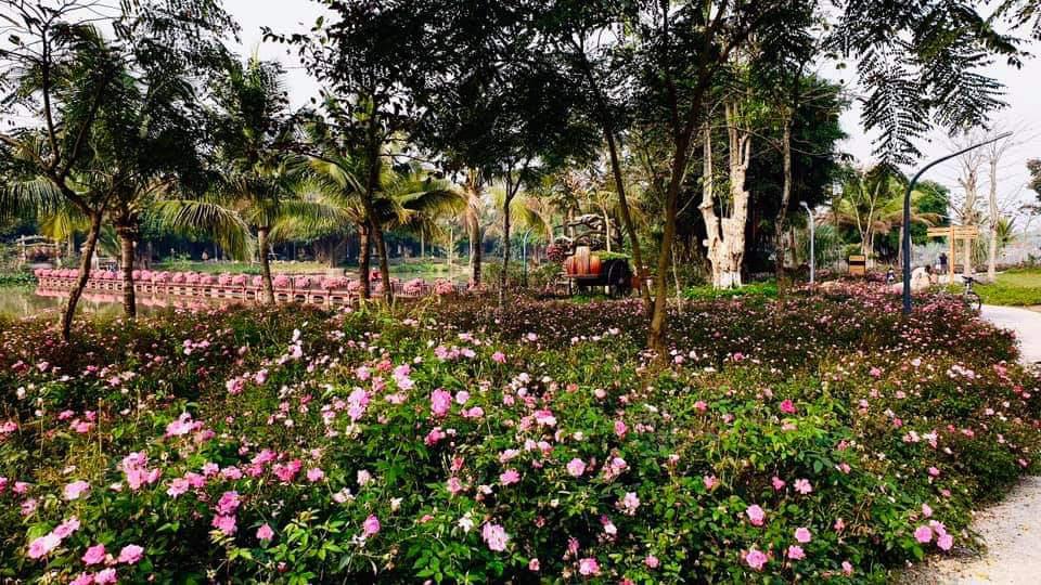Hơn một triệu bông hồng nở hoa rực rỡ khắp Ecopark - Ảnh 8.