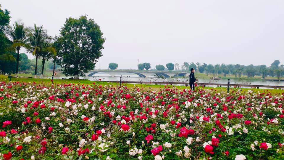 Hơn một triệu bông hồng nở hoa rực rỡ khắp Ecopark - Ảnh 9.