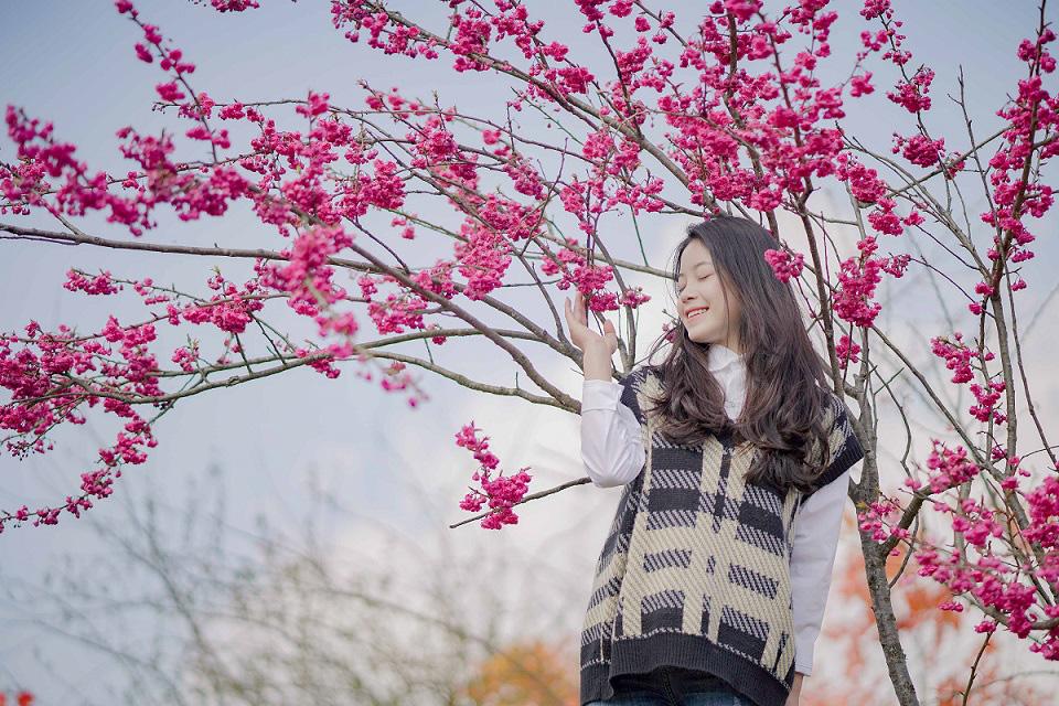 Choáng ngợp anh đào Nhật Bản, đào rừng Fansipan nở rộ đẹp rực rỡ - Ảnh 3.