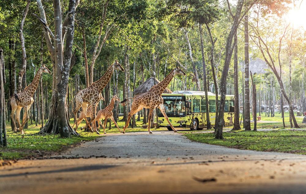 Vingroup khai trương siêu quần thể nghỉ dưỡng, vui chơi, giải trí hàng đầu Đông Nam Á - Phú Quốc United Center - Ảnh 11.