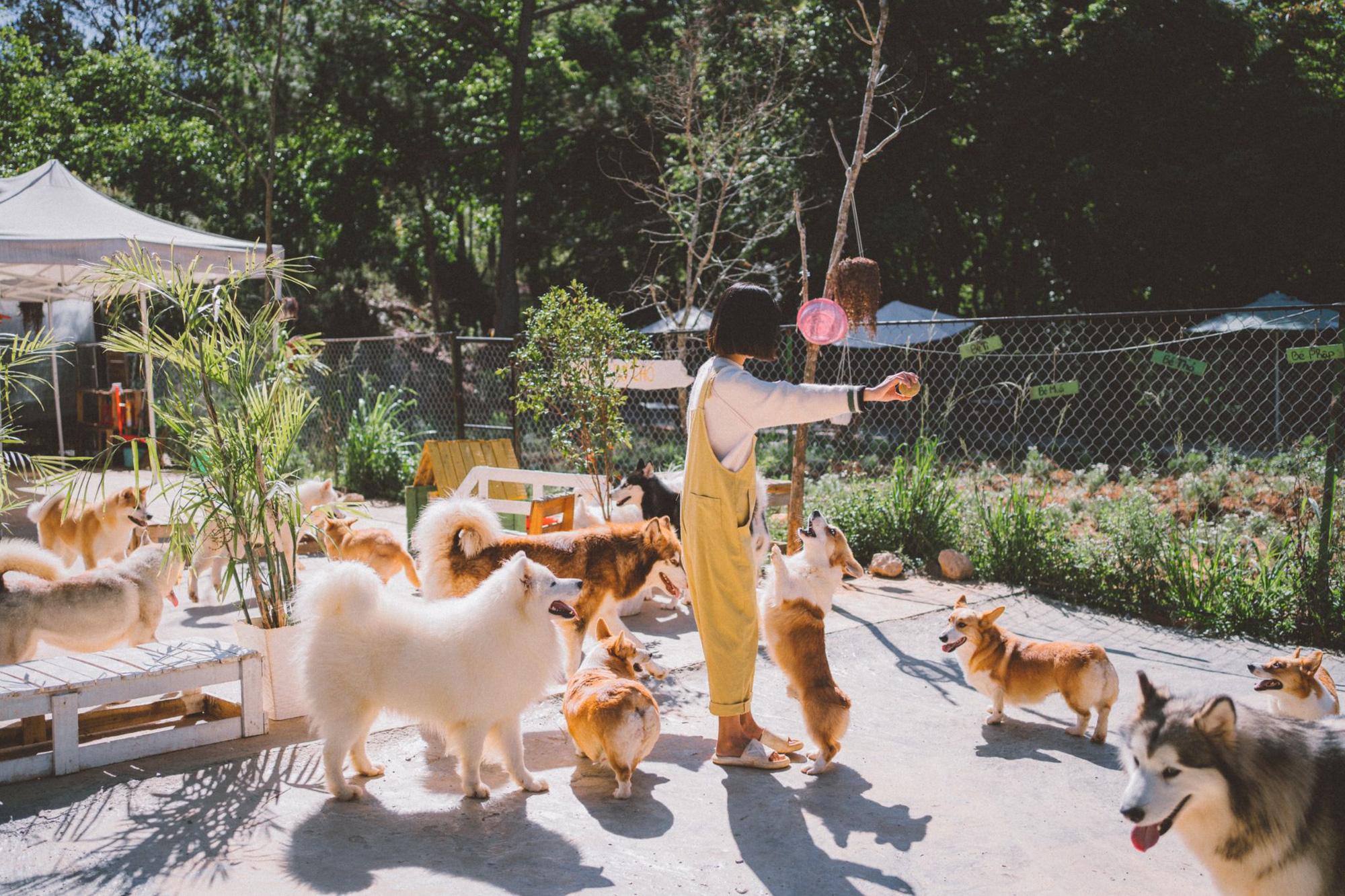 Giấc mơ về Đà Lạt của cặp đôi 9x và khu vườn cún bên bờ suối mộng mơ - Ảnh 4.