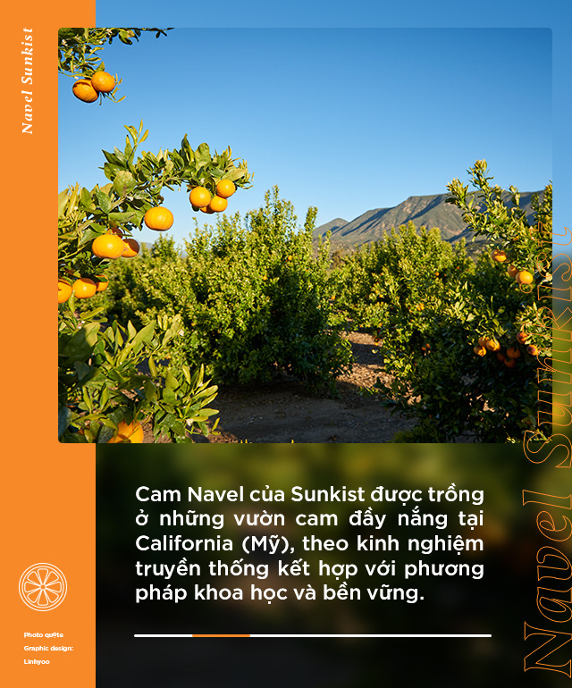 Loại cam hot từ Mỹ được food blogger Việt nổi tiếng lựa chọn, tìm hiểu mới biết quá trình trồng và chăm sóc cực kỹ lưỡng! - Ảnh 2.