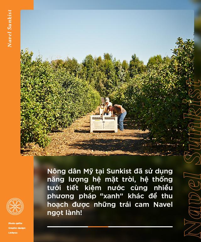 Loại cam hot từ Mỹ được food blogger Việt nổi tiếng lựa chọn, tìm hiểu mới biết quá trình trồng và chăm sóc cực kỹ lưỡng! - Ảnh 3.