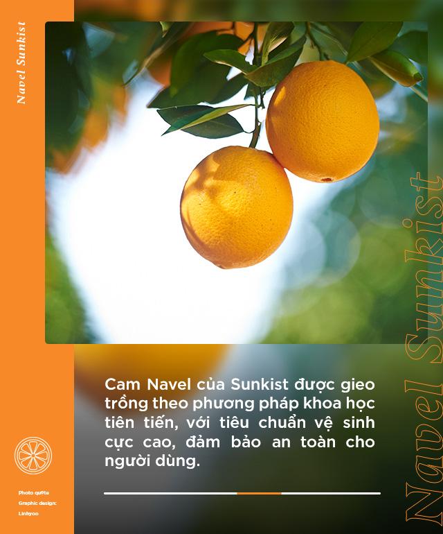Loại cam hot từ Mỹ được food blogger Việt nổi tiếng lựa chọn, tìm hiểu mới biết quá trình trồng và chăm sóc cực kỹ lưỡng! - Ảnh 4.