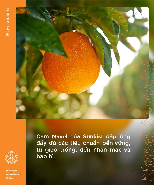 Loại cam hot từ Mỹ được food blogger Việt nổi tiếng lựa chọn, tìm hiểu mới biết quá trình trồng và chăm sóc cực kỹ lưỡng! - Ảnh 5.