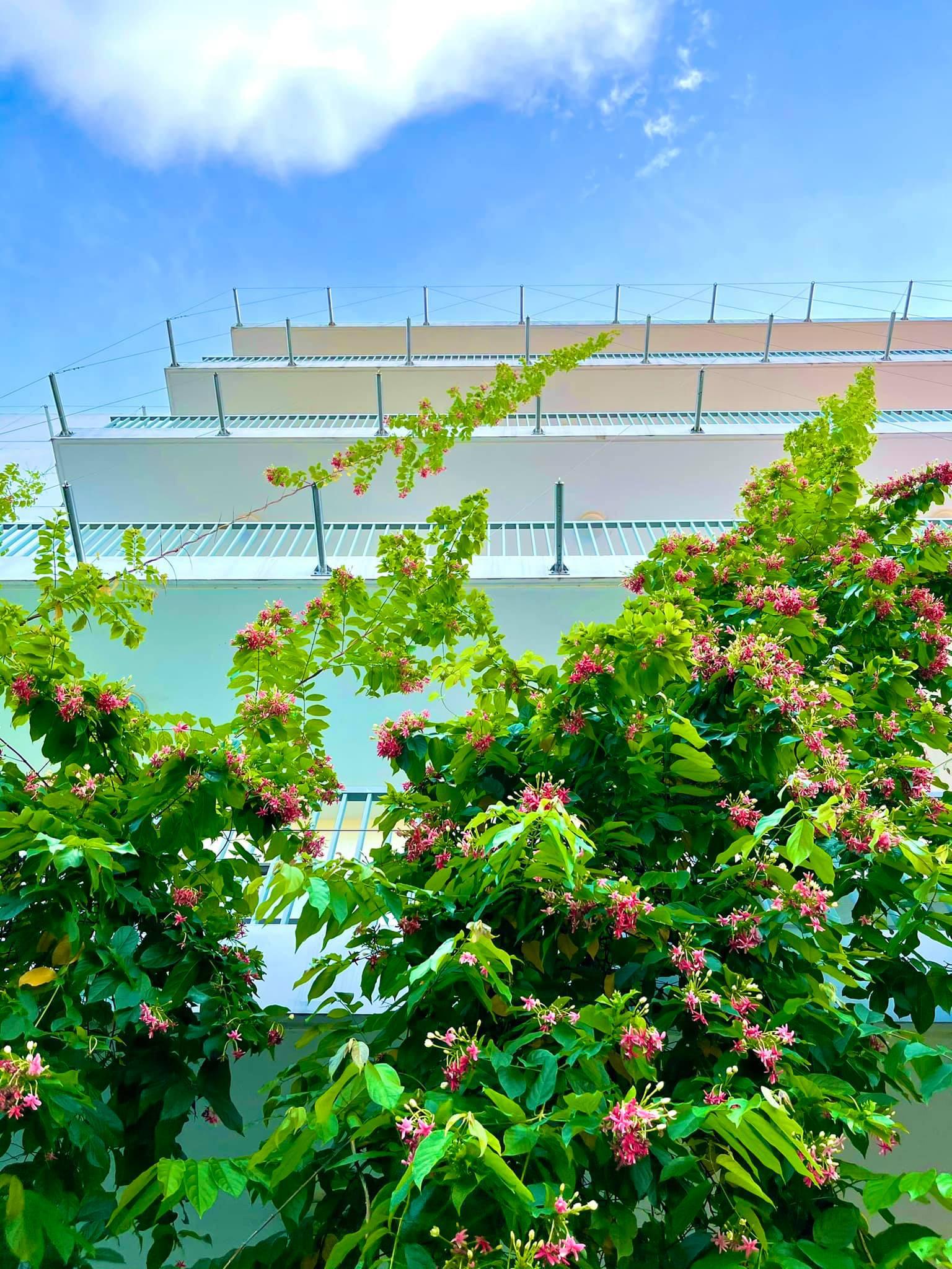 Cận cảnh khu cách ly Covid-19 xanh mát tại campus Hòa Lạc - Ảnh 3.