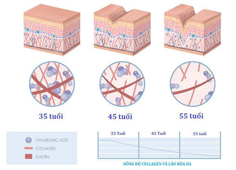 ELASTEN Việt Nam đưa sản phẩm collagen bán chạy hàng đầu tại Đức chính thức ra mắt thị trường Việt Nam - Ảnh 1.