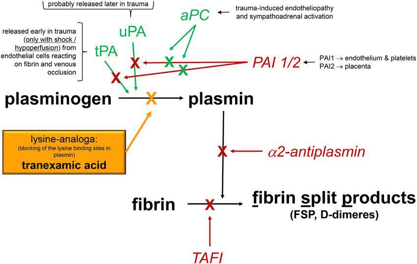 Khám phá ứng dụng của Tranexamic Acid trong mỹ phẩm - Ảnh 4.
