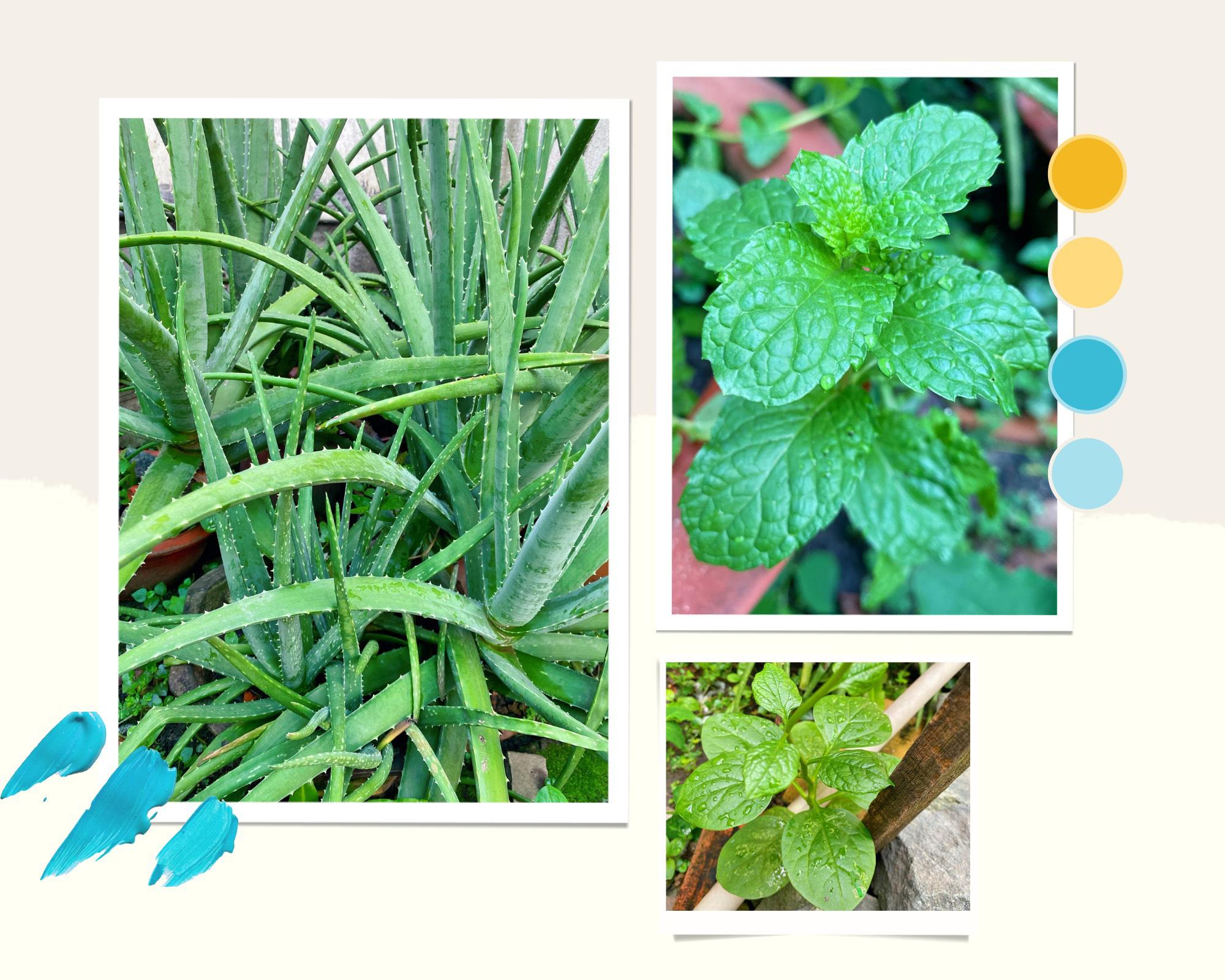 """Giới trẻ Sài Gòn tự trồng cả vườn rau, hóa giải """"bài toán"""" thực phẩm mùa dịch - Ảnh 1."""