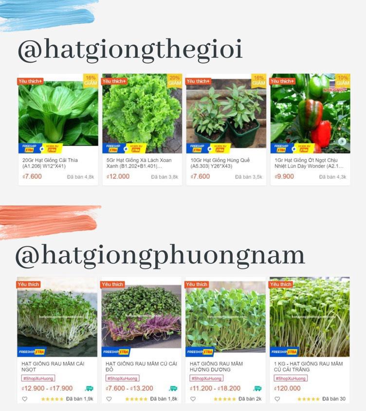 """Giới trẻ Sài Gòn tự trồng cả vườn rau, hóa giải """"bài toán"""" thực phẩm mùa dịch - Ảnh 2."""