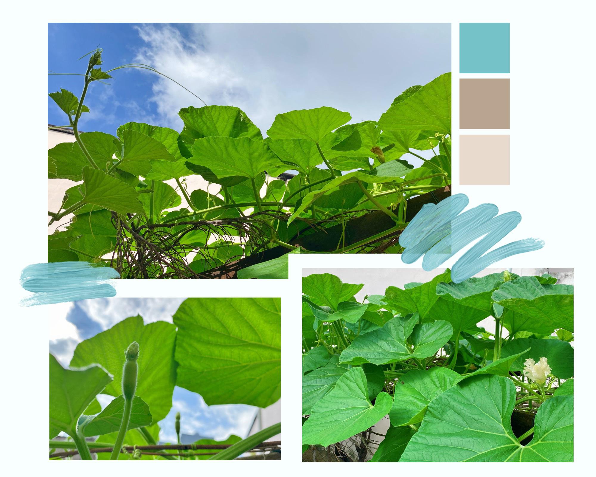"""Giới trẻ Sài Gòn tự trồng cả vườn rau, hóa giải """"bài toán"""" thực phẩm mùa dịch - Ảnh 3."""