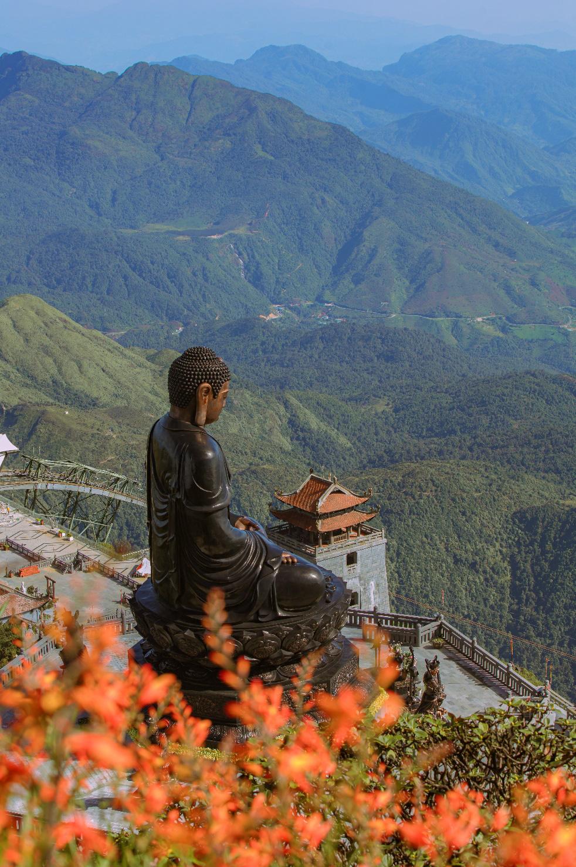 Mênh mông sắc vàng cam của hoa dơn lúa đẹp kiêu sa trên đỉnh Fansipan - Ảnh 2.