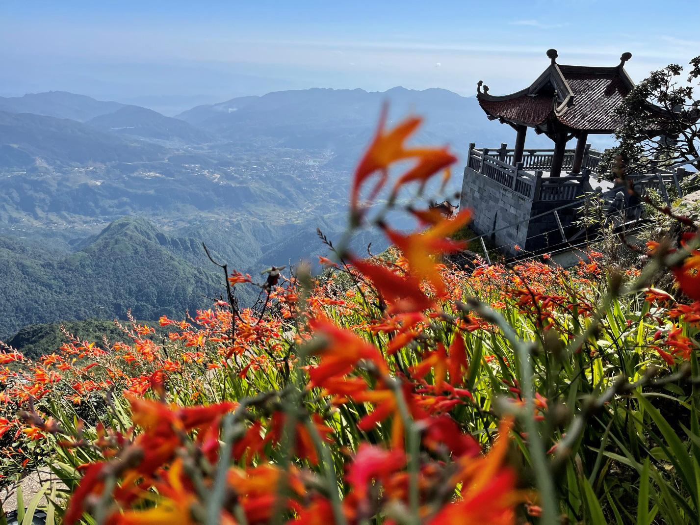 Mênh mông sắc vàng cam của hoa dơn lúa đẹp kiêu sa trên đỉnh Fansipan - Ảnh 3.