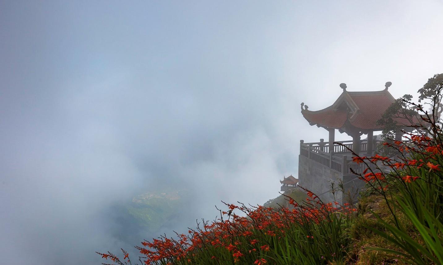 Mênh mông sắc vàng cam của hoa dơn lúa đẹp kiêu sa trên đỉnh Fansipan - Ảnh 6.