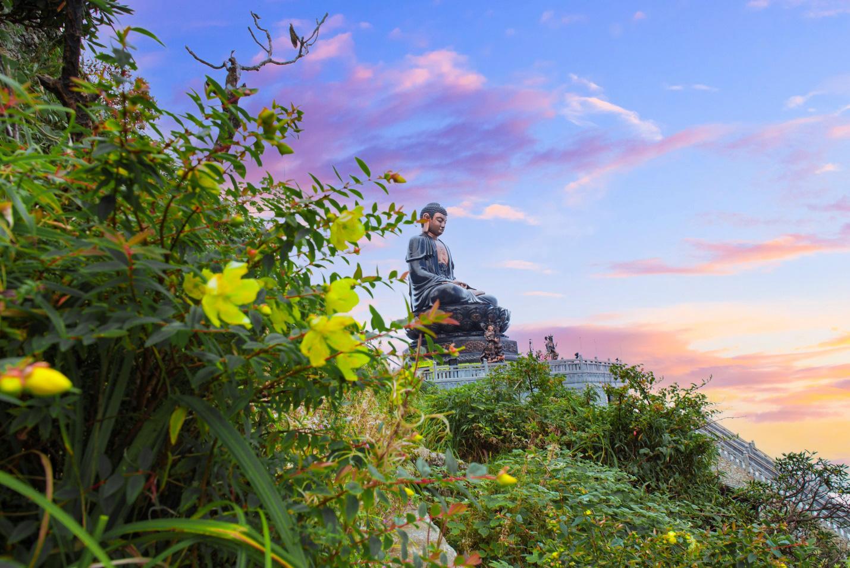 Mênh mông sắc vàng cam của hoa dơn lúa đẹp kiêu sa trên đỉnh Fansipan - Ảnh 7.