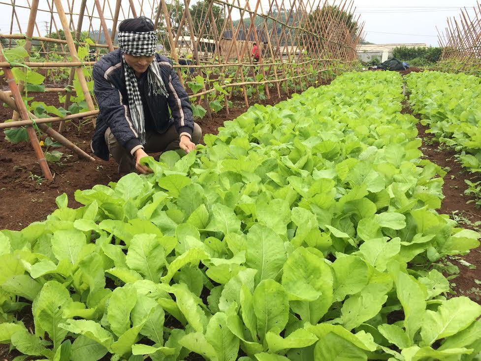 """""""Không làm nông nghiệp hữu cơ theo phong trào"""""""