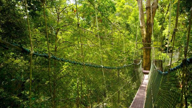Hành trình lên rừng xuống biển và trải nghiệm độc đáo tại Penang - Malaysia - Ảnh 8.