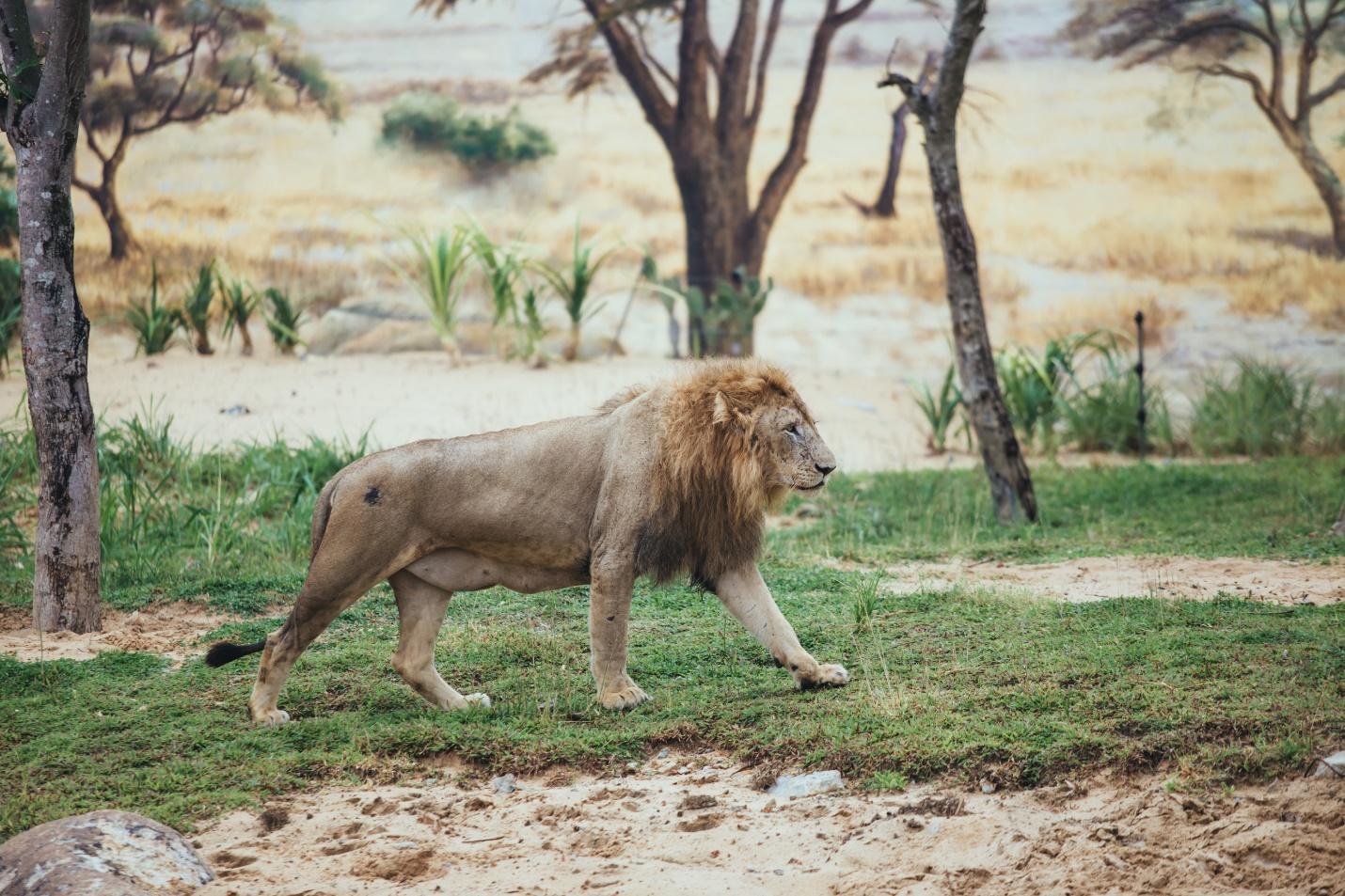 Một vòng khám phá River Safari - Công viên bảo tồn động vật hoang dã trên sông tại Hội An - Ảnh 2.