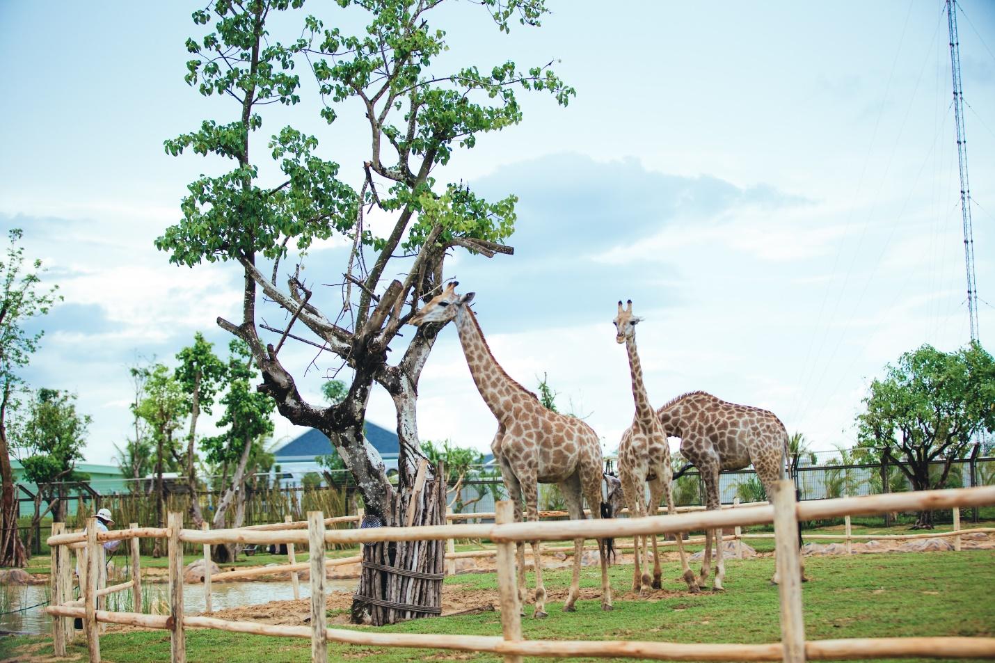 Một vòng khám phá River Safari - Công viên bảo tồn động vật hoang dã trên sông tại Hội An - Ảnh 6.