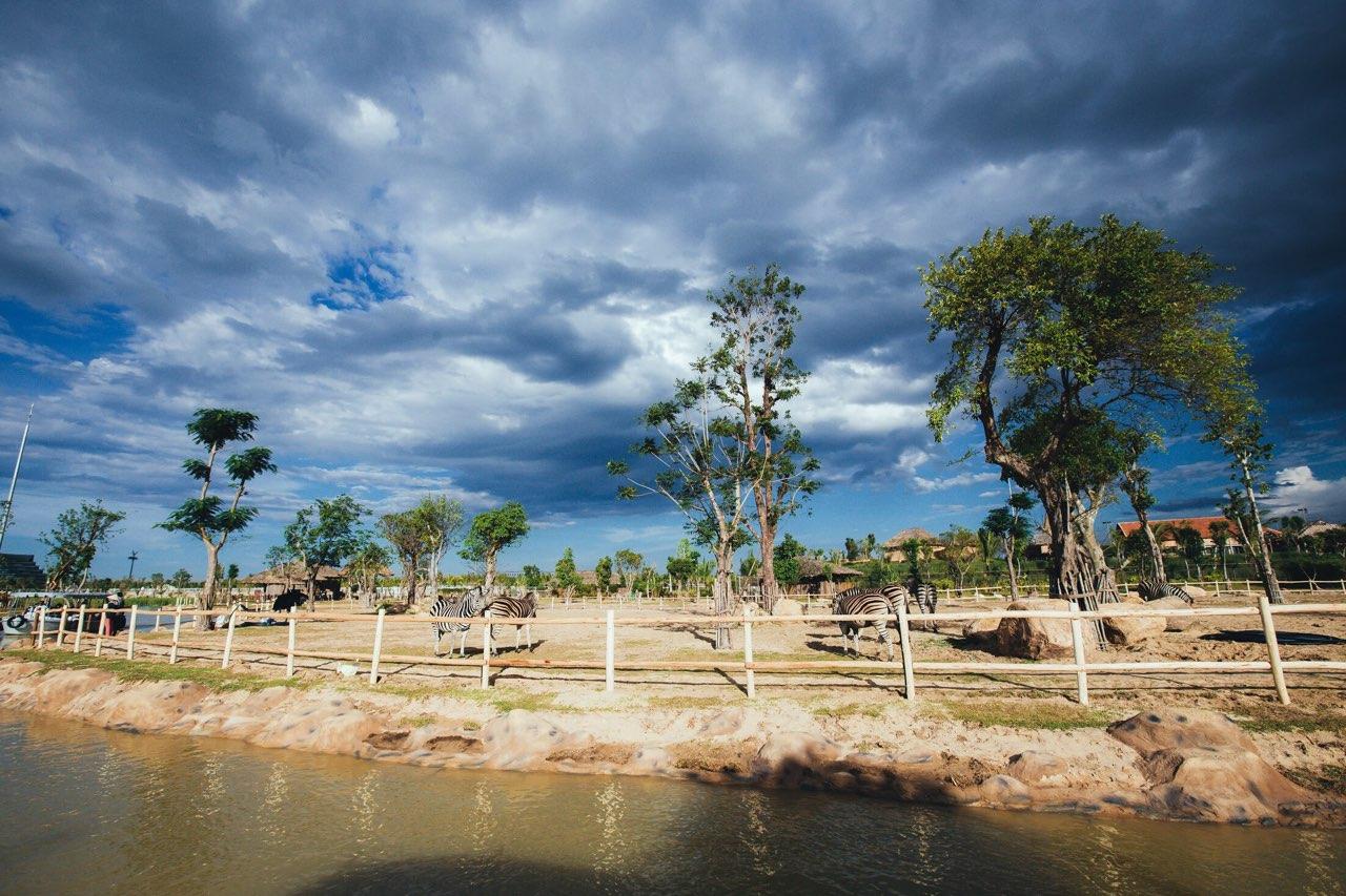 Một vòng khám phá River Safari - Công viên bảo tồn động vật hoang dã trên sông tại Hội An - Ảnh 7.