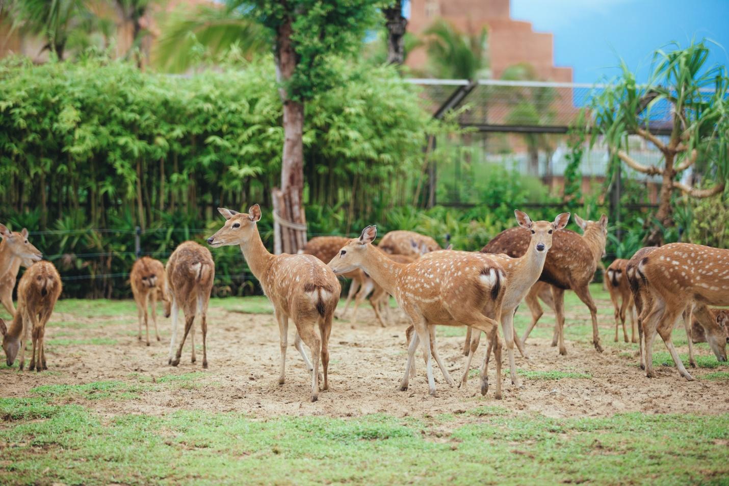 Một vòng khám phá River Safari - Công viên bảo tồn động vật hoang dã trên sông tại Hội An - Ảnh 10.