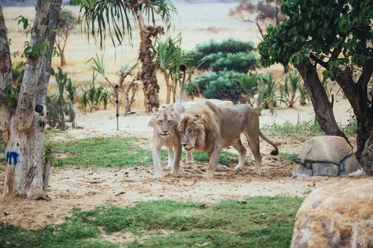 Một vòng khám phá River Safari - Công viên bảo tồn động vật hoang dã trên sông tại Hội An - Ảnh 11.