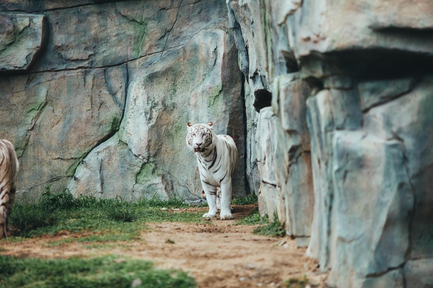 Một vòng khám phá River Safari - Công viên bảo tồn động vật hoang dã trên sông tại Hội An - Ảnh 12.